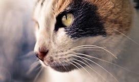 Gatto fresco Fotografia Stock