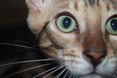 Gatto fresco Immagini Stock Libere da Diritti