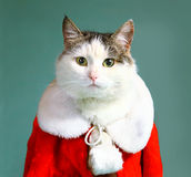 Gatto fresco di gatto in mensola del camino dell'indumento del Babbo Natale Fotografia Stock Libera da Diritti