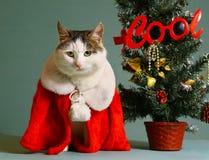 Gatto fresco di gatto in mensola del camino dell'indumento del Babbo Natale Fotografie Stock
