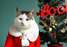 Gatto fresco di gatto in mensola del camino dell'indumento del Babbo Natale Fotografie Stock Libere da Diritti