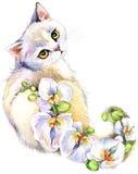 Gatto Gatto dell'acquerello Fondo dell'acquerello del fiore Fotografia Stock