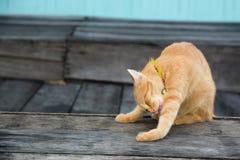 Gatto giallo Immagini Stock