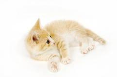 Gatto giallo che riposa sulla priorità bassa bianca immagini stock