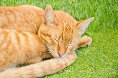 Gatto giallo di sonno Fotografia Stock