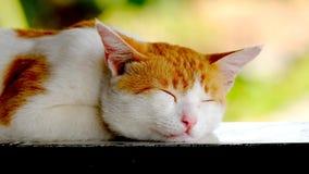 Gatto giallo sveglio, addormentato pacificamente Fotografia Stock