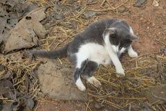 Gatto grasso pigro Fotografie Stock