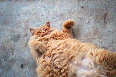 Gatto grasso rosso che si trova sul suo indietro Immagini Stock Libere da Diritti