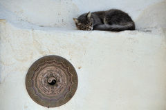 Gatto in Grecia Fotografie Stock