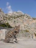 Gatto greco Immagini Stock