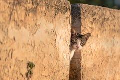 Gatto greco che guarda tramite una parete di pietra al crepuscolo, nel Peloponneso, la Grecia fotografia stock libera da diritti