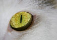 Gatto Green-eyed Fotografie Stock Libere da Diritti