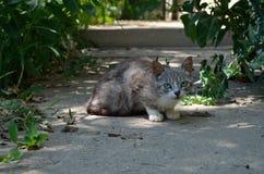 Gatto grigio Fotografia Stock