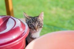 Gatto grigio che dà una occhiata fuori da dietro i barilotti fotografia stock libera da diritti