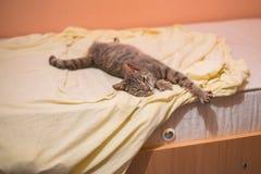 Gatto grigio che dorme e che riposa sul letto Fotografia Stock Libera da Diritti