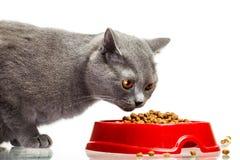 Gatto grigio che mangia dalla ciotola isolata su bianco Fotografie Stock