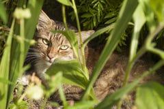 Gatto grigio che si siede nell'erba Fotografia Stock