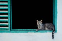 Gatto grigio che si trova nella finestra immagini stock
