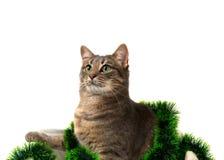 Gatto grigio con gli occhi verdi che si siedono merce nel carrello con il lamé di Natale Fotografia Stock Libera da Diritti