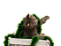 Gatto grigio con la seduta nel canestro di vimini con il lamé di Natale Fotografia Stock