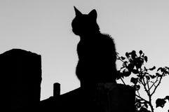Gatto grigio con le bande Fotografie Stock Libere da Diritti