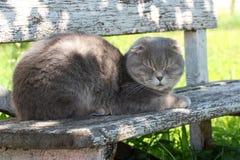 Gatto grigio di sonno immagini stock