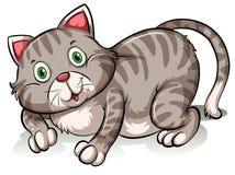 Gatto grigio grasso Immagini Stock