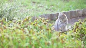 Gatto grigio nell'erba video d archivio