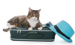 Gatto grigio serio che si siede su una valigia verde immagini stock