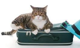Gatto grigio serio che si siede su una valigia verde immagine stock libera da diritti