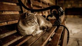 Gatto grigio sul banco Fotografia Stock