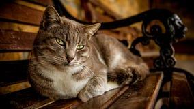 Gatto grigio sul banco Immagini Stock