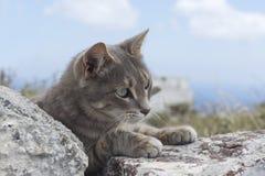 Gatto grigio sveglio Fotografie Stock Libere da Diritti