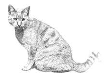 Gatto Illustrazione nel tiraggio, stile di schizzo fotografie stock