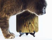 Gatto improvviso durante la fotografia dell'oggetto immagine stock libera da diritti