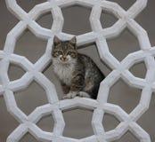 Gatto incorniciato dalla scultura islamica a Fatih Camii Istan Fotografia Stock Libera da Diritti
