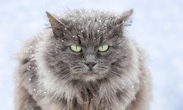 Gatto innevato con gli occhi verdi che si siedono sullo street_ fotografia stock libera da diritti