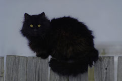 gatto Insetto-osservato sul recinto Fotografia Stock