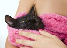 Gatto inzuppato nero sveglio dopo un bagno immagini stock