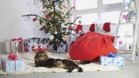 Gatto laizy divertente di Maine Coon come Santa Claus si trova dall'abete decorato bello nuovo anno Movimento lento, 3840x2160 archivi video