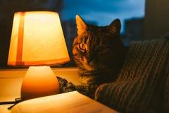 Gatto, lampada da tavolo e libro Casa accogliente nel crepuscolo immagine stock libera da diritti