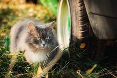 Gatto lanuginoso di strisciamento Fotografia Stock