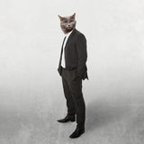 Gatto lanuginoso divertente in un uomo d'affari del vestito. collage Immagine Stock