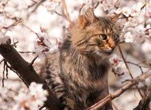 Gatto lanuginoso su un albero Immagini Stock Libere da Diritti