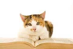 Gatto macchiato e libro, isolati Fotografia Stock