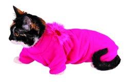 Gatto in maglione Fotografia Stock