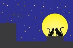 Gatto maschio e femminile su un tetto Immagine Stock