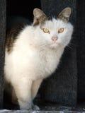 Gatto misterioso Fotografie Stock Libere da Diritti