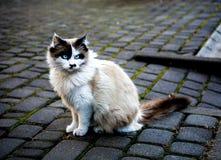 Gatto mistico Immagini Stock