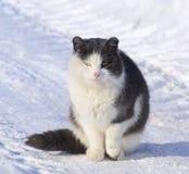 Gatto molto freddo Immagini Stock Libere da Diritti